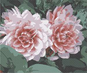 Twin dahlias, petal hues spanning a spectrum of pink. Original photo by Uwe Herman.
