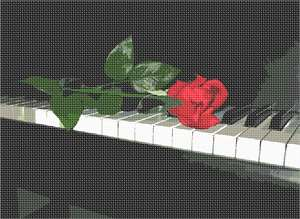 A fresh red rose resting on the black baby grand piano keys. Red roses symbolize love and romance. Pink roses symbolize gratitude, grace, admiration, and joy. Orange roses symbolize enthusiasm and passion. Yellow roses symbolize friendship. White roses symbolize innocence and purity. This is a perfect gift for the music lover, musician, orchestra performer or aficionado. There is a lot of truth to the common saying that music soothes the soul. Music has officially been recognized as a form of therapy. It stimulates so many parts of the brain and emotions to a rate that it can lower blood pressure and heart rate.