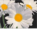 Daisy lovers will appreciate this trio of white flowers with their joyful yellow centers.