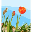 A tulips leads the rest, folding open its delicate petals to catch some rays.