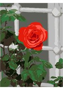 A red rose peeking through the window curtains at the inhabitants within.