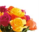 A bundle of roses. Yellows, oranges and fuchsia petals blend together to form the perfect bouquet.