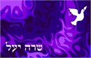 Siddur Dove On Night Sky